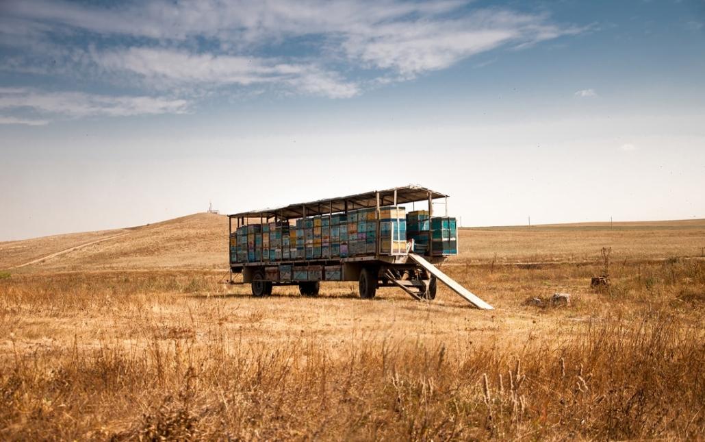 Quinoa in Africa