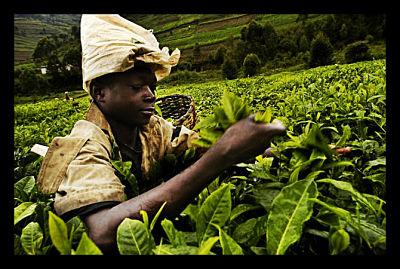 Rural African Farmer