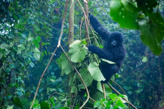 Rwanda's Ecotourism Industry