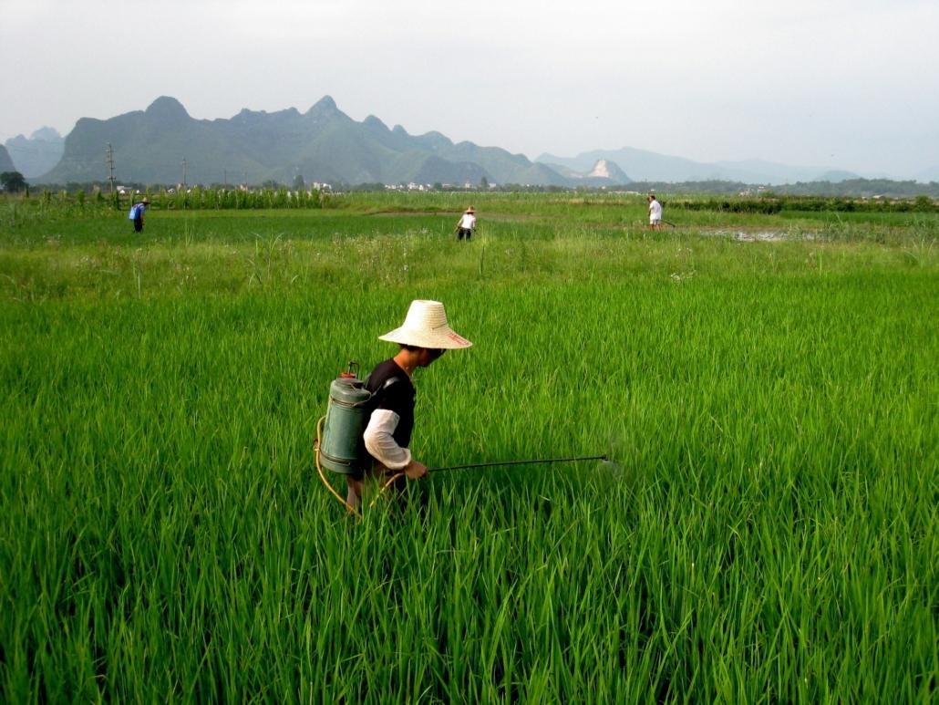 SDG 10 in China