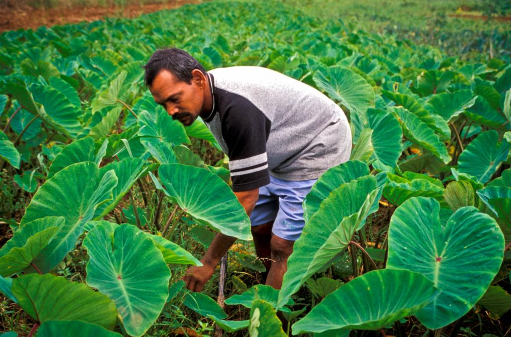 Smart Farms Fiji