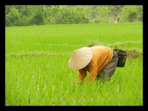 South_east_aisa_farming_opt