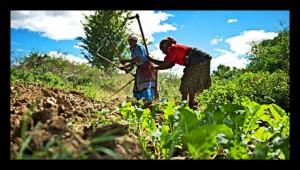 Sub Saharan Africa Agriculture