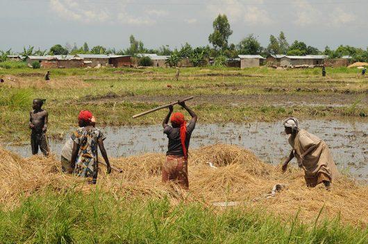 Sustainable Agriculture in Burundi