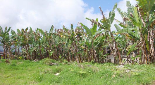 Sustainable Agriculture in Venezuela