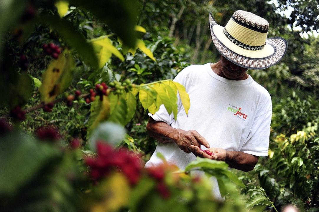 Helping Latin American Coffee Farmers