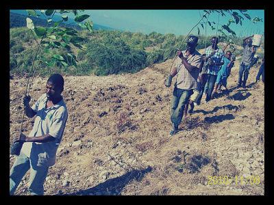 Tree Planting_opt