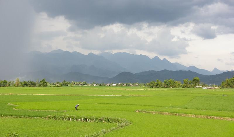 Vietnam rice farming app