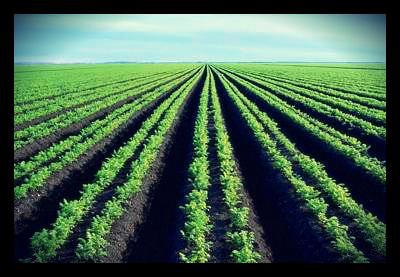 african_farmland