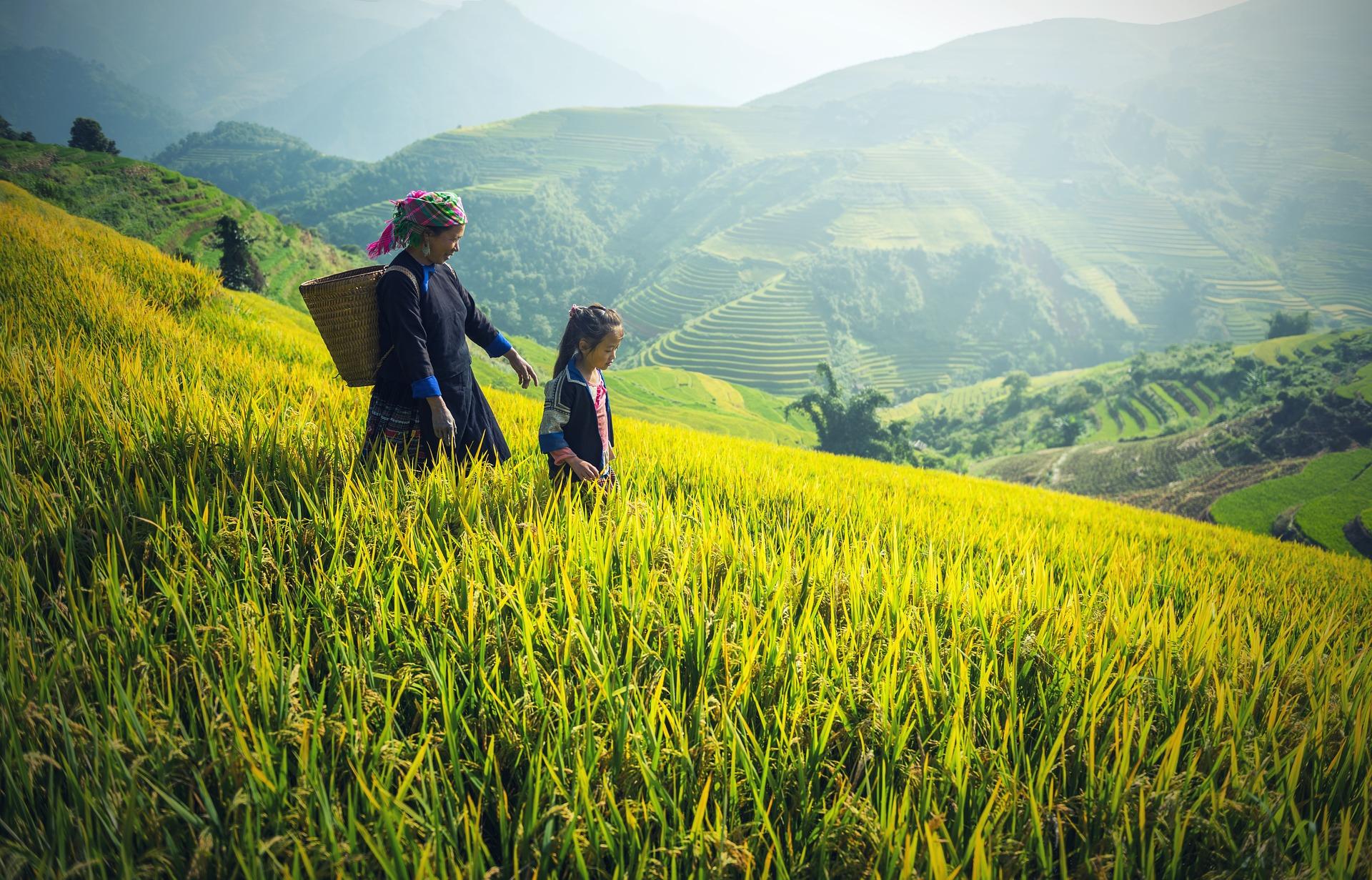blockchain technology for rice farmers