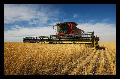 agriculture_rises