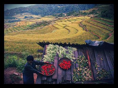 Bhutan: World Leader in Organic Farming