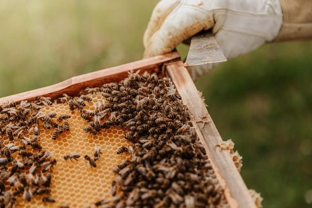 women for bees program