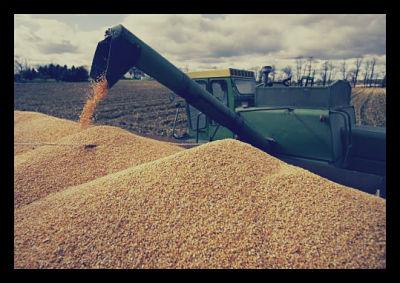 corn_opt