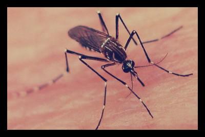 Dengue Fever Epidemic in Brazil