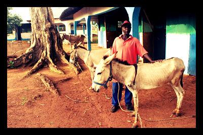 donkey_developing_world