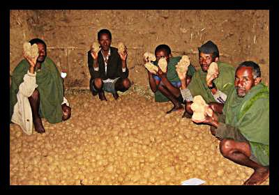 Rise in Potato Production Breathes New Life Into Ethiopian District
