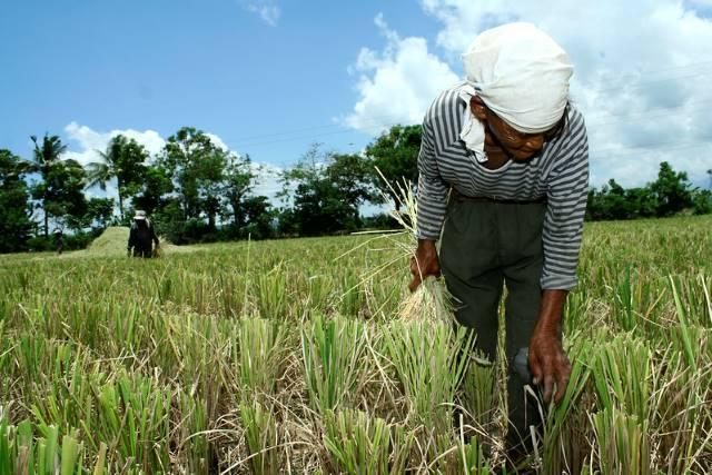 food security across Asia