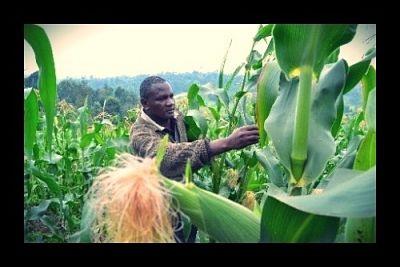 Scientific Breakthrough in Stress: Free Crops