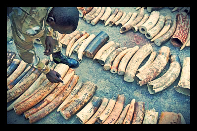 kenya_elephant_poaching