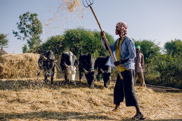 livestock can alleviate
