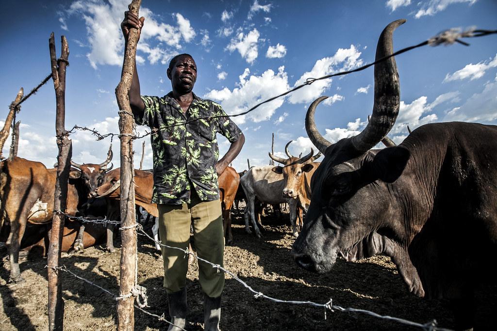 Livestock Health in Africa
