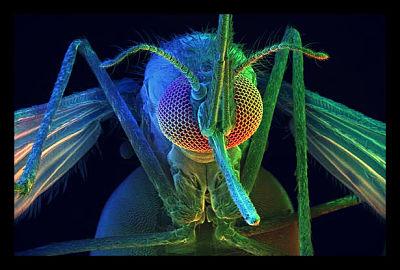 mosquito_opt