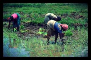 regional-food-security-in-indonesia