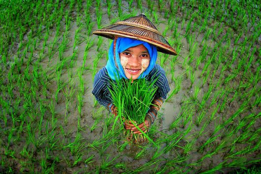 sustainable agriculture in Myanmar