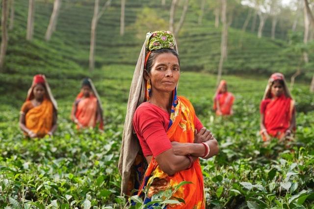 tea farmers in India
