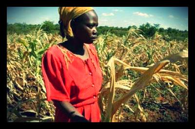 zimbabwe_food_crisis_corn_shortage